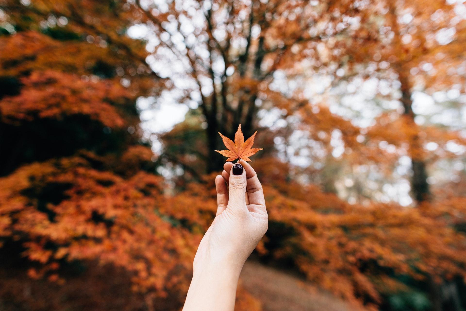 عکاسی از غروب پاییز